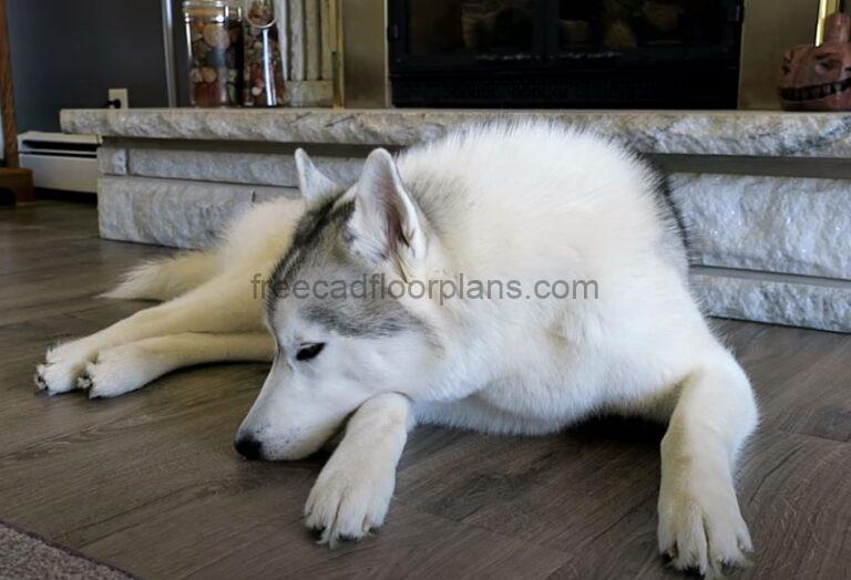 Do Dogs Scratch The Bamboo Floors? (Tips and Best Options)